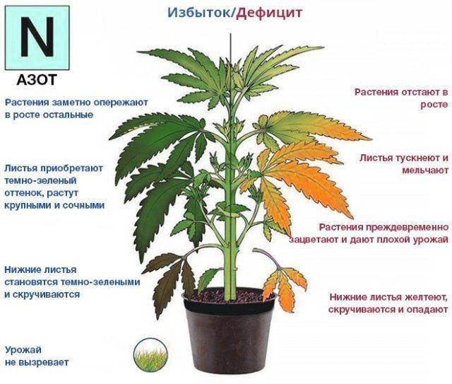 Дефицит и избыток азота у растений - признаки