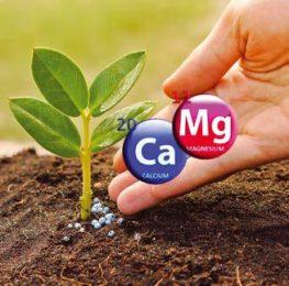 Кальций и магний для растений