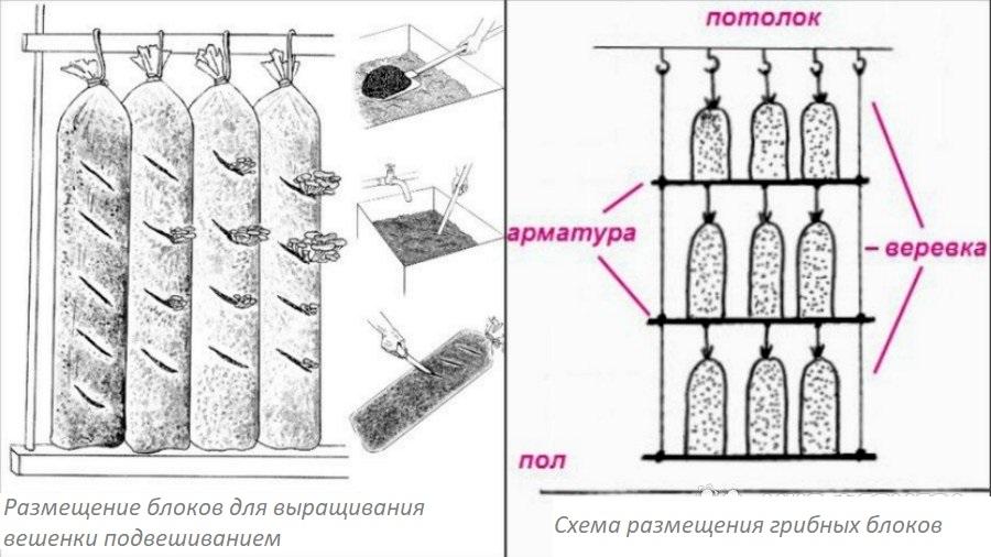 Схема размещения блоков вешенки