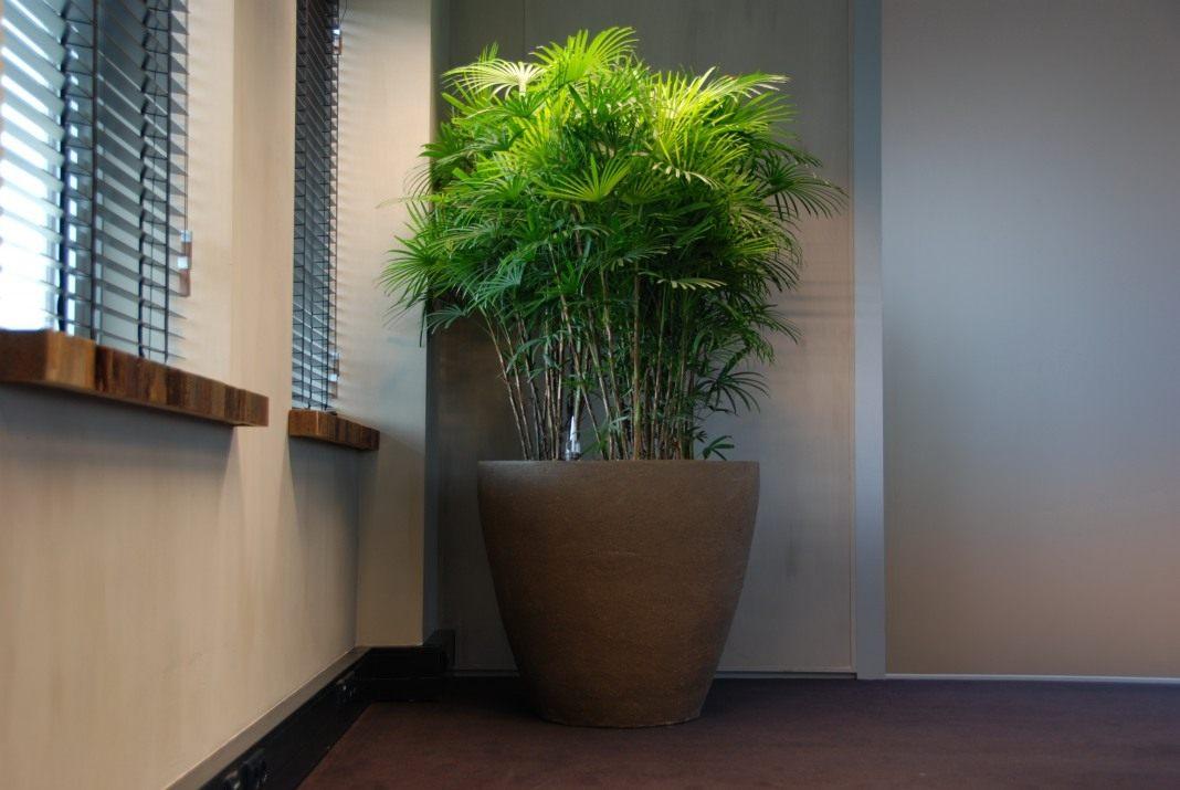 Бамбуковая
