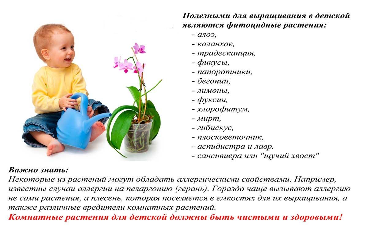 полезные цветы в доме