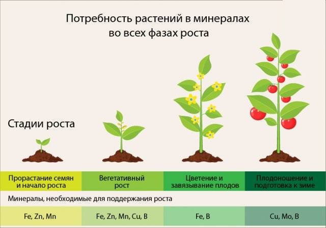 Потребность растений в микроэлементах