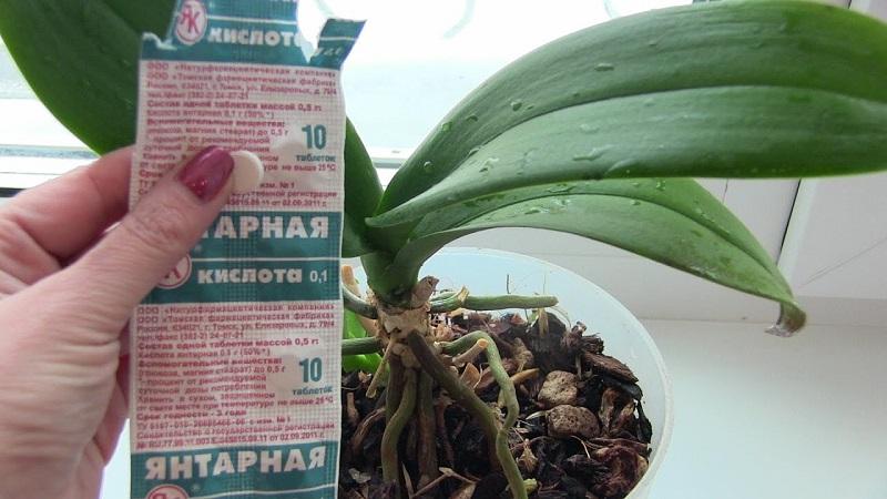 Кислота для орхидей