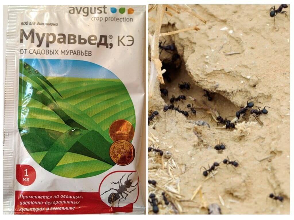 Муравьед от муравьев