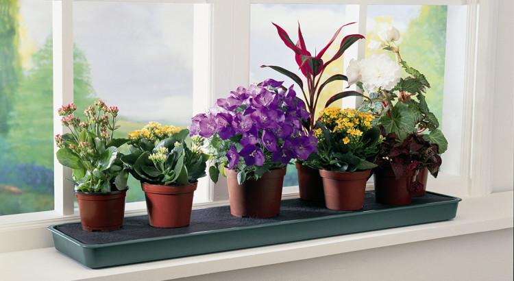 растения на подоконннике