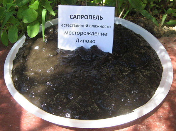 Сапропель - органическое удобрение