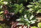 растение в тени