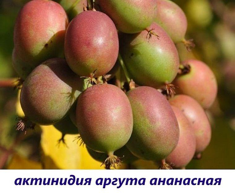 ананасная