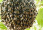 Дом диких пчел