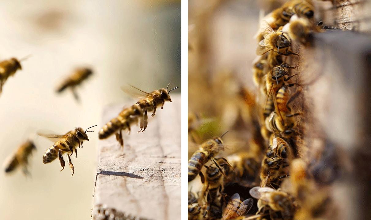 Пчела и взяток