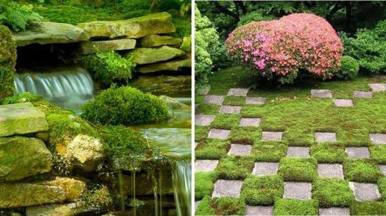 мох в ландшафтном дизайне