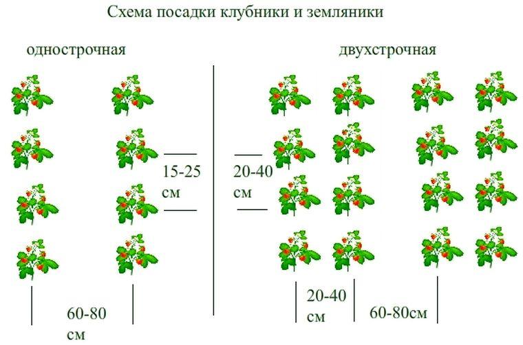 схема посадки клубники на агроволокно