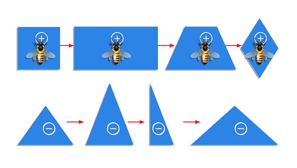 Пчелы различают предметы