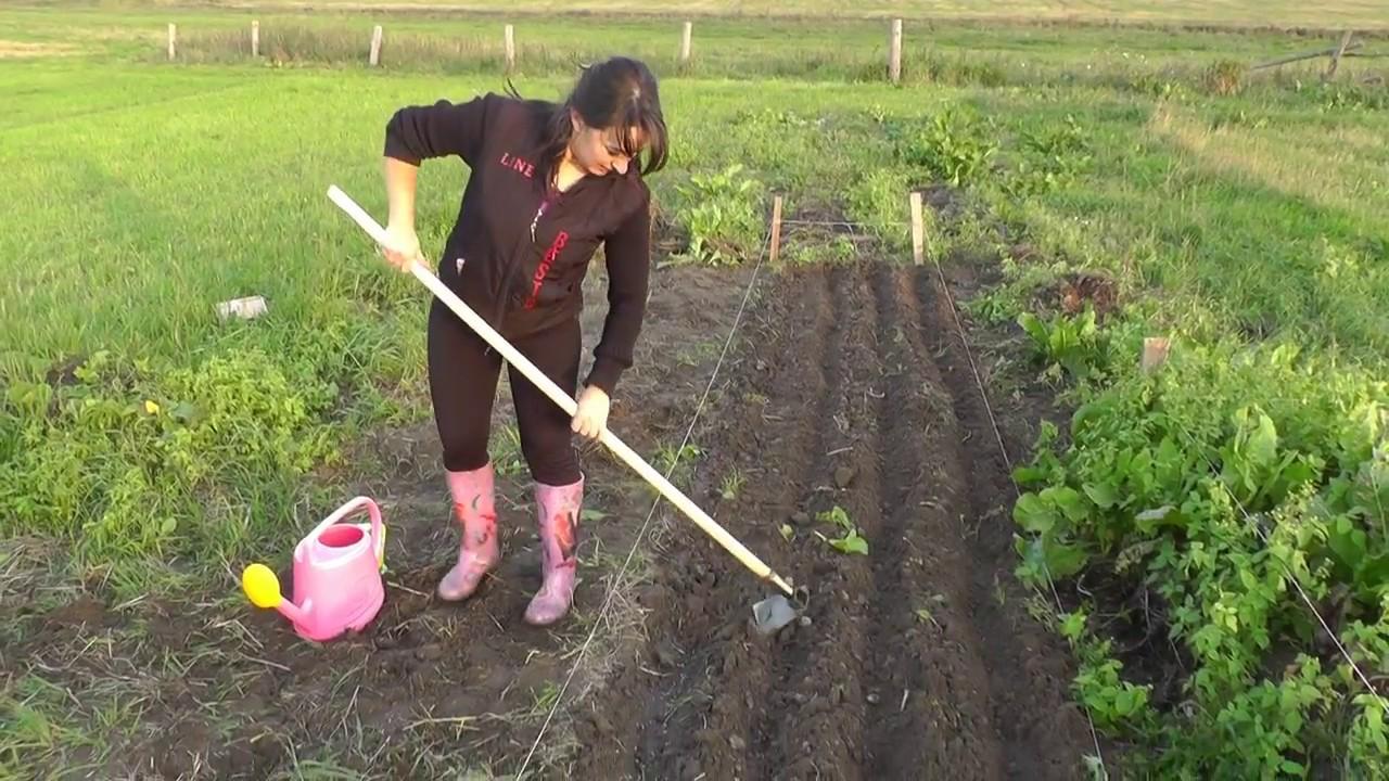 Посев ржи