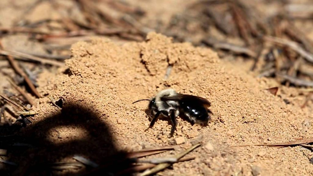 Пчела в земле