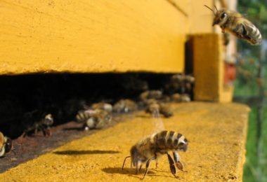 пчела в улье