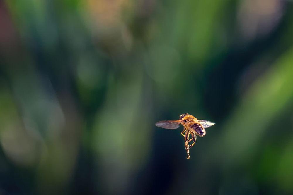 Пчела летит